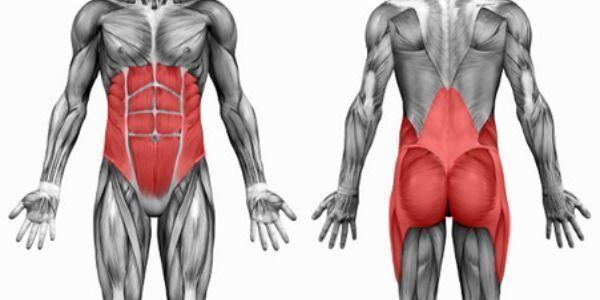 Músculos del cuerpo encargados de la función del core.