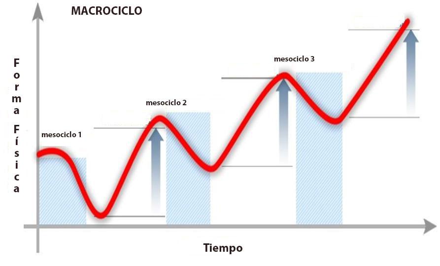Distribución de los macro ciclos para alcanzar los picos de forma