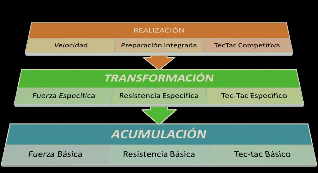 Fases del entrenamiento ATR. Con el periodo de transformación en medio